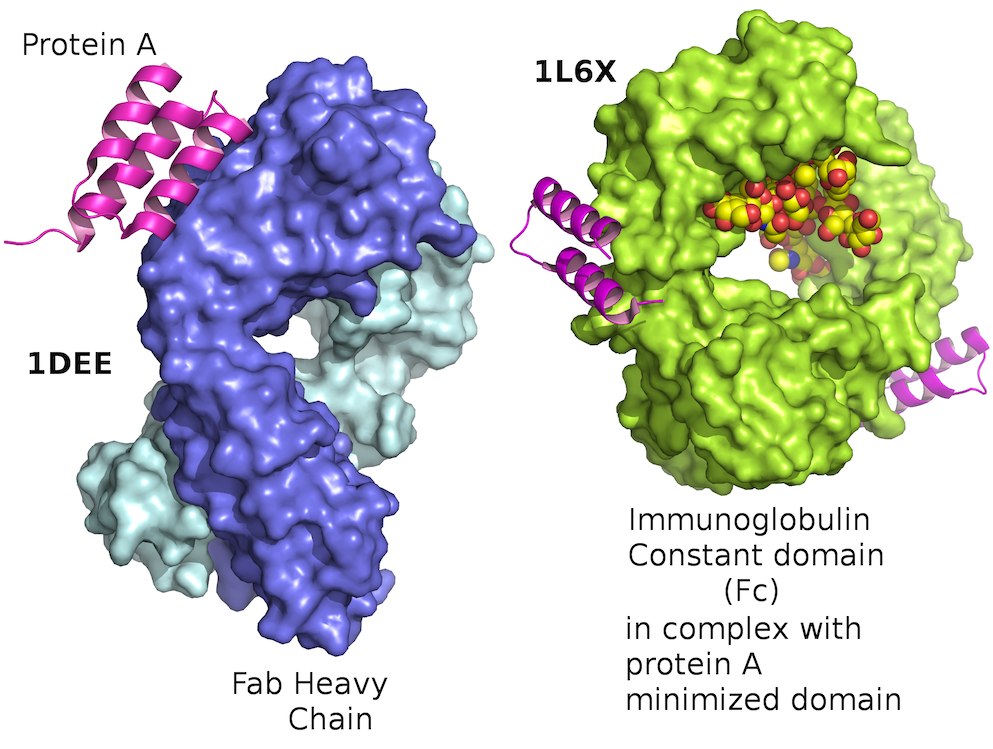 """What is """"protein folding""""? A brief explanation"""